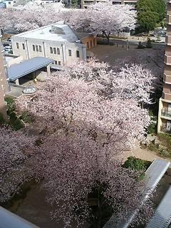 image/akane-papa-2006-03-29T08:45:20-1.jpg