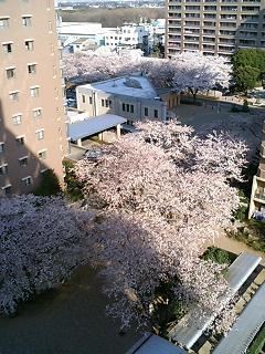 image/akane-papa-2006-03-31T08:38:01-1.jpg