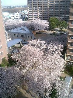 image/akane-papa-2006-04-01T08:04:25-2.jpg